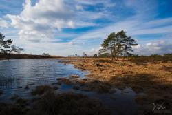 Grenspark de Zoom-Kalmthoutse Heide