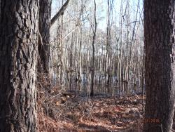 Princess Anne Wildlife Management Area