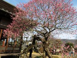 Kansho-ji Temple