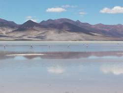 Parque Nacional Salar del Huasco