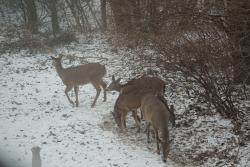 View of wildlife from room 221