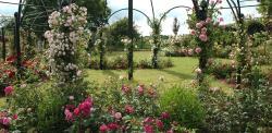 Peter Beales Roses Ltd