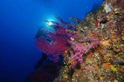 Unica Diving Elba