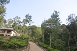 Hidden in the jungles and lush green forests ... awaits a silent, peaceful and magnificent holiday destination