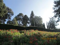 Greatest value for money in Ooty