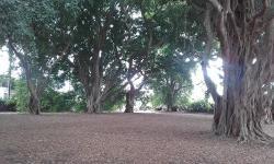 Wirreanda Park