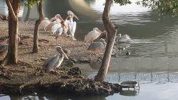 Taman Wetland