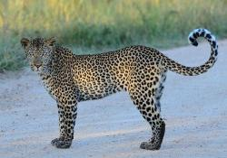 Wildlife Safaris Day Tours