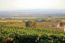 Lions Peak Vineyards