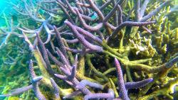 Dive and hard Corals