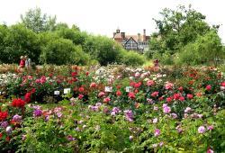 Country Garden Plant Centre & Tea Room