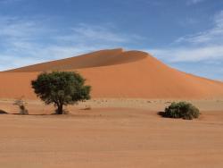 Familien Betrieb in der Wüste