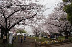 Saigoyama Park