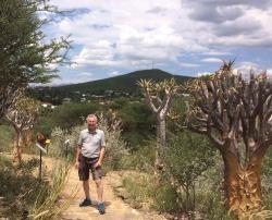 Best Quiver Trees of Windhoek
