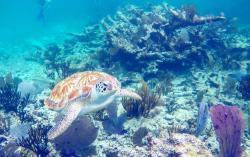 Vida Aquatica Dive Center