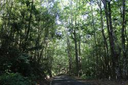 Guajataca Forest Reserve