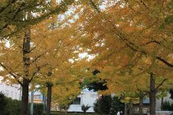 Geijutsunomori Park