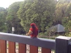 Friendly parrots