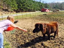 Build an Ark Animal Rescue