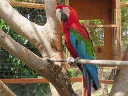 Spice Island Petting Zoo