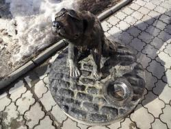 Monument-Coin Bank to a Homeless Dog