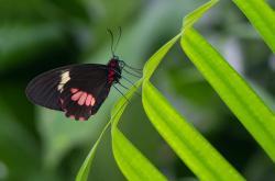 Butterfly House Karlovy Vary