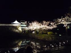 Fukuoka Castle Cherry Blossom Matsuri