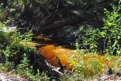 Spring Hammock Preserve