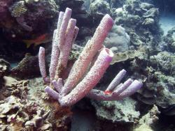 Leonora's Reef