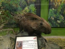 Tehran Biodiversity Museum