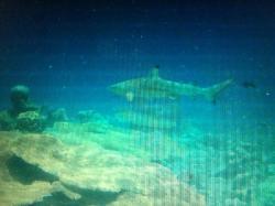 Dive Shack Rasdhoo