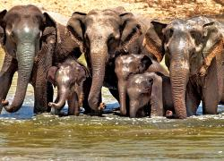Sarath Safari Sigiriya