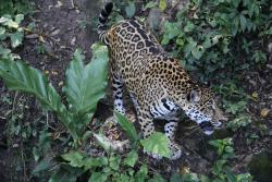 Petencito Zoo