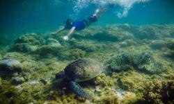 Mario's Scuba Diving and Homestay