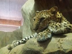 Ark Avilon Zoo