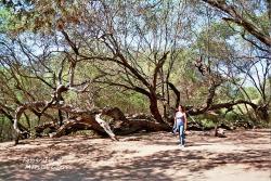 Santuario Historico Bosque de Pomac