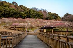 Akatsukayama Park (Gyogyo Land)