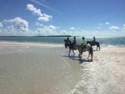 Heritage Tours & Horseback Riding