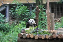 China Highlights Chengdu - Day Tour