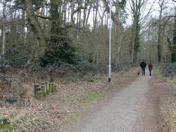 Lings Wood Nature Reserve