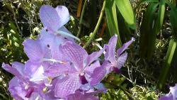 Le Jardin d'Orchidees