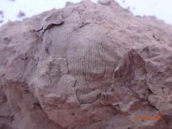Paleo Site