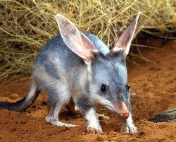 The Bilby Experience