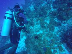 Marine Life Divers