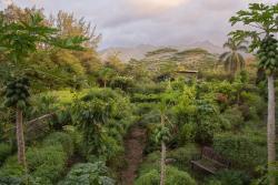 Kauai Farmacy
