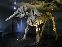 Kahramanmaras Arkeoloji Muzesi