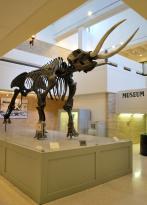 ASU Museum