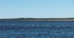 Grover Island