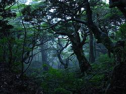 Yakushima Geographic Tour - Day Tour