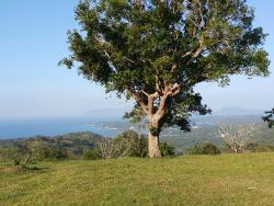Mt. Malasimbo